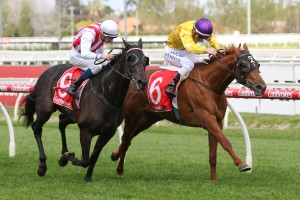 Wolfe, above in yellow colours, has drawn barrier 5 in the 2019 Caulfield Cup at Caulfield. Photo by Ultimate Racing Photos.