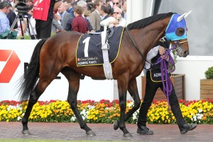 My Ambivalent will need to beat favourite Admire Rakti (pictured) home in the Melbourne Cup.