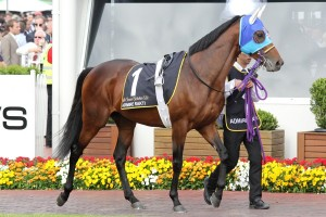 Admire Rakti headlines the likely 2014 Melbourne Cup final field. Photo: Race Horse Photos Australia