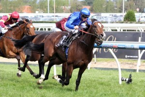 Contributer smashes the David Jones Cup with James McDonald on board. Source: Race Horse Photos Australia.