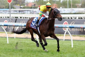 Lucky Hussler is a leading chance for success in Saturday's Group 1 The Goodwood. Photo: Race Horse Photos Australia