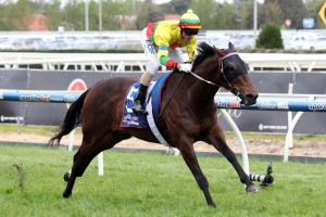 Lucky Hussler has been confirmed in the 2015 Sir Rupert Clarke Stakes final field. Photo: Race Horse Photos Australia