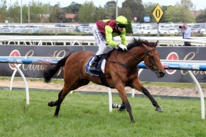 Set Square will target the 2015 Australian Oaks upon her racing resumption this season. Photo: Race Horse Photos Australia
