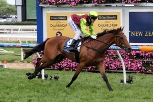 Set Square is one of two runners for Ciaron Maher in Saturday's 2016 Naturalism Stakes at Caulfield. Photo: Race Horse Photos Australia