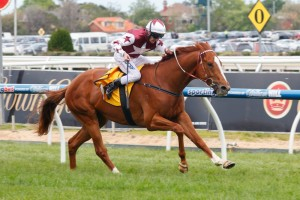 Stratum Star is our pick to take out the 2015 Memsie Stakes. Photo: Race Horse Photos Australia