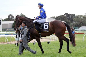 The Offer will not contest the 2014 Melbourne Cup. Photo: Race Horse Photos Australia