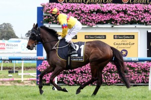 Unchain My Heart is set to run in the Sandown Cup after finishing 16th in the Melbourne Cup last Tuesday.