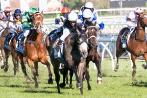 Fawkner and Dandino, who finished first and second in the Caulfield Cup, have been the big market movers in Melbourne Cup betting markets.