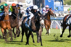Fawkner has been nominated for the 2014 Ajax Stakes this weekend