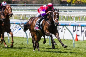 Hucklebuck will start his autumn campaign in a 1200 metre event at Morphettville in Adelaide on Saturday.