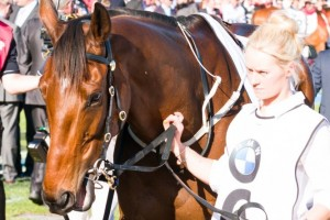 2012 champion Mr Moet has been confirmed in the 2014 CB Cox Stakes final field. Photo: Race Horse Photos Australia