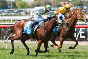 A Time For Julia highlights nominations for the 2014 Wenona Girl Handicap