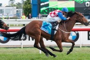 Nominations – 2013 Frederick Clissold Stakes