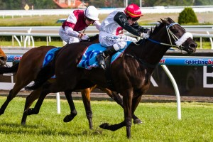 Floria has been included in nominations for the 2014 Queen Of The South Stakes