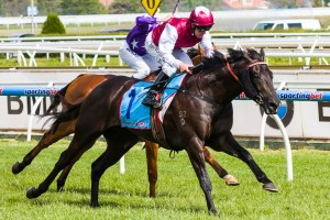 Careless is looking to follow in the footsteps of 2013 Sandown Guineas winner Paximadia (pictured) on Saturday.