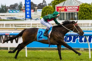 Sertorius is a leading chance for success in the 2014 Geelong Cup. Photo: Race Horse Photos Australia