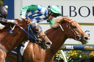 Tuscan Sling remains outright favourite in 2016 RN Irwin Stakes betting markets. Photo: Ultimate Racing Photos