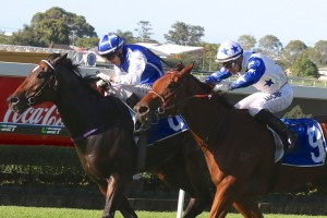 Havasay, above in blue and white colours with starts, is challenging stablemate Tyzone for favouritism in the 2018 Ramornie Handicap at Grafton. Photo by Daniel Costello.