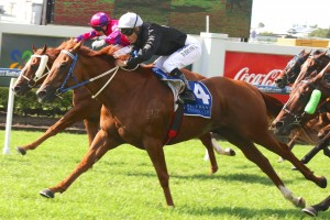 Mount Nebo is our tip to win Friday's 2016 Cameron Handicap in Newcastle. Photo: Daniel Costello