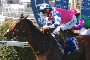 Matt Dale is confident Fell Swoop will be tough to beat in the Group 1 Doomben 10,000 this weekend. Photo: Daniel Costello