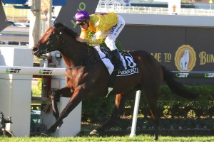 Pornichet will return to racing in Saturday's Group 2 Warwick Stakes at Randwick. Photo: Daniel Costello