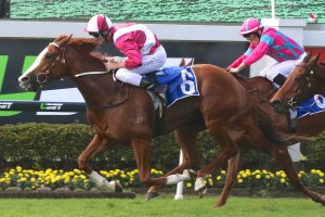 Real Love is the Races.com.au tip to win Saturday's  Group 3 Premier's Cup at Doomben. Photo: Daniel Costello