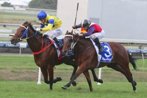 River Lad fought off Benny's Buttons to win the BRC Sprint at Doomben this afternoon.