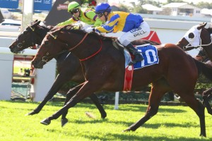 Peace Force will be set for the 2015 Tattersall's Tiara. Photo: Daniel Costello