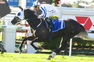 Upham is one of two Peter Moody-trained horses confirmed in the 2015 Queensland Derby final field. Photo: Daniel Costello