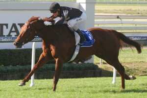 Srikandi will skip the 2015 Autumn Racing Carnival to target winter Group 1 success in Brisbane. Photo: Daniel Costello
