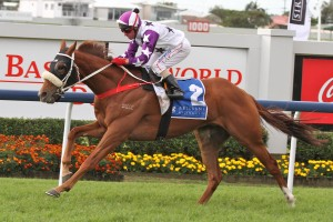 Hawkspur will return to defend his crown in Saturday's 2015 Chelmsford Stakes at Randwick. Photo: Daniel Costello