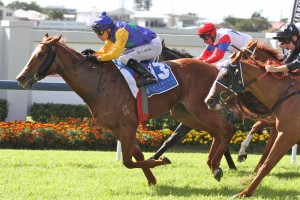 Peron is the current favourite in 2013 Tristarc Stakes betting markets.