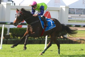 Werther remains outright favourite in 2015 Queensland Derby betting markets. Photo: Daniel Costello