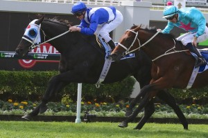 Flamingo Star (outside) is our pick to take out the 2015 Cameron Handicap. Photo: Daniel Costello