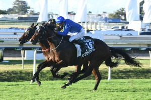 Impending, above, is looking win back to back Stradbroke Handicaps at Doomben. Photo by Steve Hart.