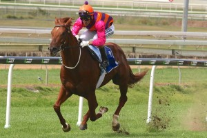2017 WJ Healy Stakes Tips & Betting Update