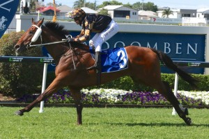 Man Of His Word is likely to back-up at Royal Randwick on Saturday. Photo: Daniel Costello