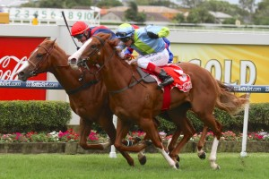 Flamenco Girl (outside) is one of 15 2YO hopefuls running in the Racing Minister's Classic at the Sunshine Coast.