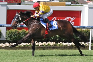 Divine City will carry the top-weight in the 2014 Nudgee Quality Handicap at Eagle Farm on Saturday.