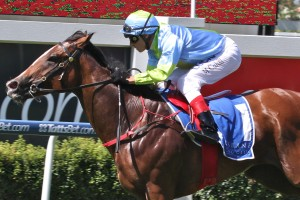 Oakleigh Girl will resume in the Rubiton Stakes after ten months in the spelling paddock.