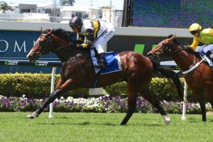 Dieters is one of three horses that have been scratched from the 2016 Magic Millions Classic. Photo by: Daniel Costello