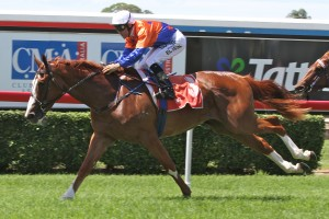 Trainer Tony Gollan is confident of a successful 2014 Spring Racing Carnival for Looks Like The Cat