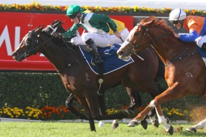 Almalad has been confirmed in the final field for the 2014 Golden Rose Stakes