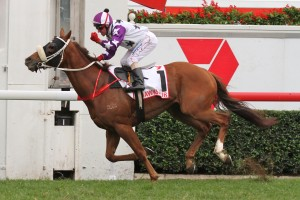 Queensland Derby betting odds at Ladbrokes.com.au
