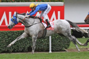 Stradbroke Handicap winner Linton has been scratched from the 2013 Group 1 Emirates Stakes.