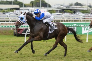 Mr Quickie, above, is included in the first acceptances for the 2019 Caulfield Cup at Caulfield. Photo by Steve Hart.