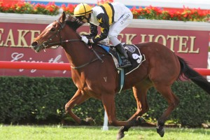 Enquare is betting favourite to take out the 2014 Magic Millions 3YO Guineas.