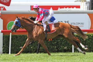 Trainer Robert Heathcote is hoping Volkhere can lead in the 2014 Ipswich Cup