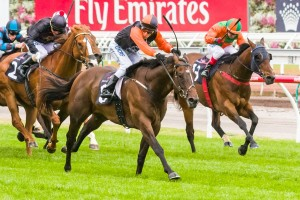 Kaiser Sun is a clear favourite to record his fourth straight win in the Kensington Stakes this weekend.