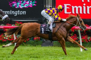 Bugatty is one of a number of juveniles that have been backed to win the 2014 Chairman's Stakes at Caulfield on Saturday.